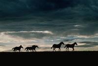 馬の群れのシルエットと空(灰色)