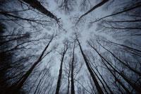 枯れる木々 2月