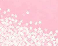 桜の花のイラスト(ピンク)