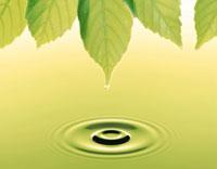 葉から落ちる水滴と波紋 フォトイラスト 02022027871| 写真素材・ストックフォト・画像・イラスト素材|アマナイメージズ