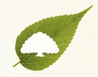 葉のレリーフ 大樹