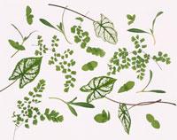 いろいろな葉のイメージ 02022047220| 写真素材・ストックフォト・画像・イラスト素材|アマナイメージズ