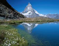 マッターホルンとワタスゲ咲くリッフェル湖畔 スイス