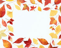 秋の葉の集合
