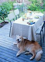 ガーデンパーティのテーブルと犬 02022345207| 写真素材・ストックフォト・画像・イラスト素材|アマナイメージズ