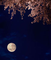 夜桜と月 02022346034| 写真素材・ストックフォト・画像・イラスト素材|アマナイメージズ