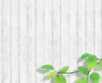 白い木の壁と桜の葉