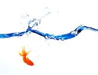 金魚と水面