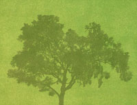 芝生に映る樹木の影
