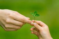 四つ葉のクローバーと親子の手