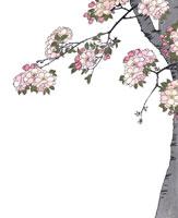 浮世絵の桜
