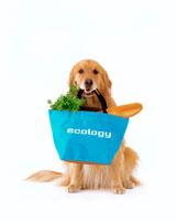 エコバッグと犬 02022346659| 写真素材・ストックフォト・画像・イラスト素材|アマナイメージズ