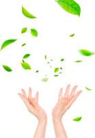手と風に舞う葉