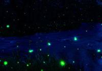 小川の蛍の夜景
