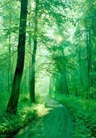 緑の中の道