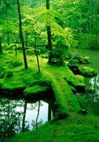 新緑の苔寺