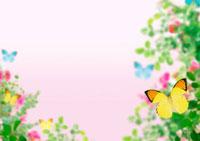 花と蝶のイメージ