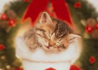 長靴の中で眠る猫とリース