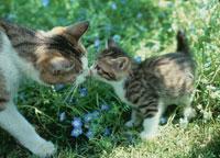 鼻を付け合う猫の親子