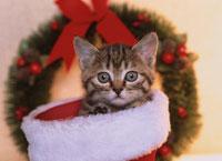 クリスマスの長靴の中に入った子猫