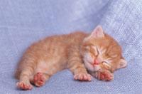 眠る仔猫 02029010011  写真素材・ストックフォト・画像・イラスト素材 アマナイメージズ
