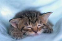 和猫 02029010019| 写真素材・ストックフォト・画像・イラスト素材|アマナイメージズ