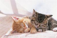 じゅうたんの上で眠る子猫2匹