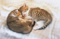 眠る子猫2匹