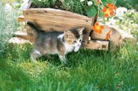芝生の上を歩く子猫 02029010116| 写真素材・ストックフォト・画像・イラスト素材|アマナイメージズ