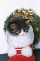 クリスマスの子猫
