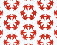 紅葉のもみじのパターン 02050010025| 写真素材・ストックフォト・画像・イラスト素材|アマナイメージズ