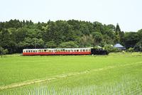 小湊鉄道,トロッコ列車