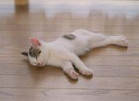 横向きで眠る仔猫