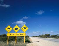 道路標識(カンガルーとウォンバットとラクダ) オーストラリア 02069004976| 写真素材・ストックフォト・画像・イラスト素材|アマナイメージズ