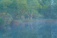 霧のかかる水面 5月 裏磐梯 福島県