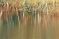 水面の反射 10月 北塩原村 福島県