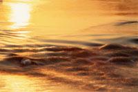 オレンジ色に反射する多摩川の水面 12月 東京都