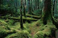 長野県八ヶ岳 8月