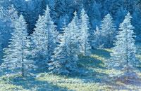 麦草峠の霧氷 11月 八ヶ岳 長野県