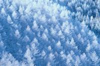 森林の樹氷の風景 12月 立科町 長野県