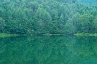 湖面に映る森林 8月 蓼科 長野県