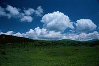 緑の草原と夏雲 7月 霧ケ峰 ネガの件