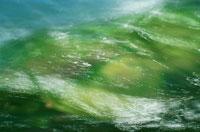 輝く水の流れ 鳥海山麓 秋田県