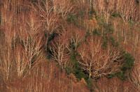 晩秋の樹々    長野県 10月