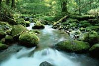 八ヶ岳山麓の渓流    長野県 8月