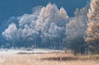 霜氷の木々10月   奥日光  栃木県