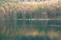 奥蓼科の晩秋の池の風景 11月 長野県