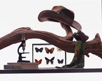 蝶の標本と顕微鏡