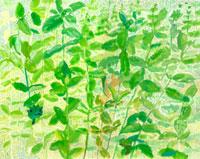 緑の葉の庭にいる妖精 02112010283| 写真素材・ストックフォト・画像・イラスト素材|アマナイメージズ
