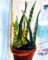 観葉植物とペットボトル